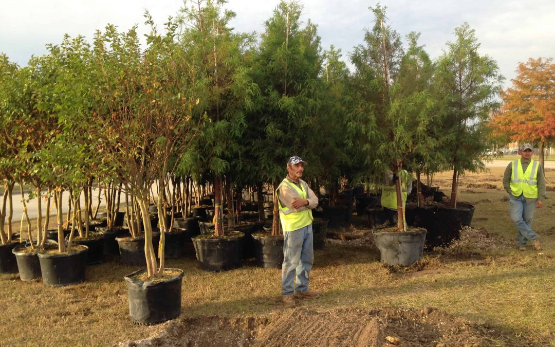 TXDOT brings in new trees to Orange. Let's hear it for the Great State of Texas!!!!